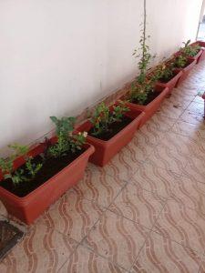 احواض زرع بجدة