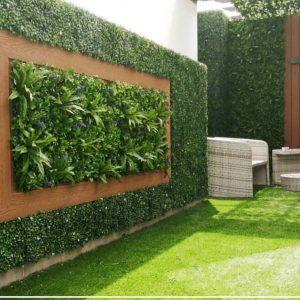 عشب جدارى الطائف