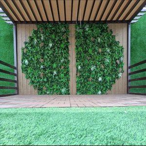 عشب جدارى مكة